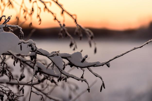 O ramo da árvore cobriu com a neve pesada e o tempo do por do sol na estação do inverno na vila kuukiuru do feriado, finlandia.