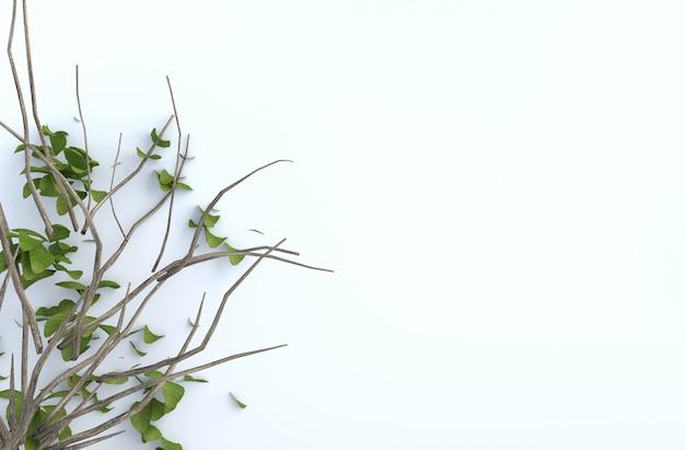 O ramo de árvore e o sopro saem na parede do cimento branco. fundo 3d render.