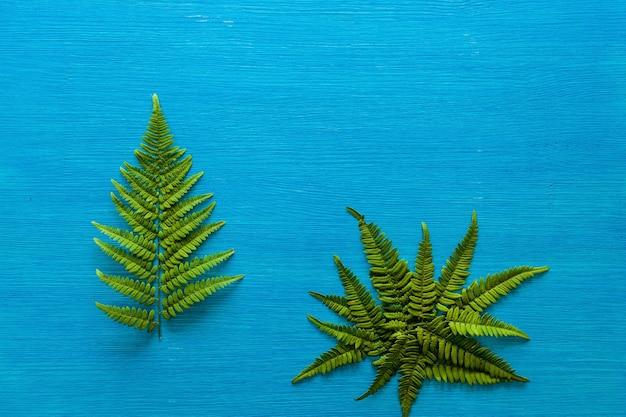 O ramo verde da samambaia repousa sobre uma placa de madeira azul