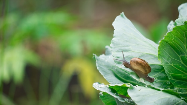 O rastejamento pequeno do caracol no vegetal sae no tempo da gota da chuva.