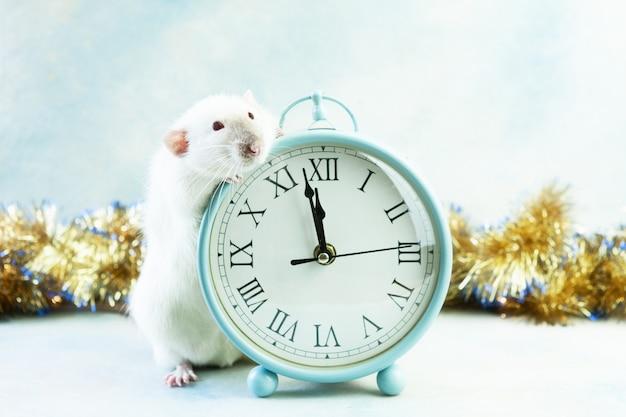 O rato branco pequeno bonito, rato senta-se com pulsos de disparo do vintage.