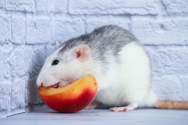 O rato preto e branco come pêssego suculento, doce e saboroso. fechar-se