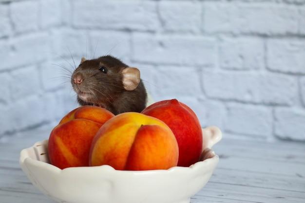 O rato preto e branco come pêssego suculento, doce e saboroso.
