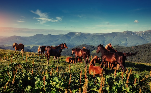 O rebanho de cavalos nas montanhas em ensolarado fantástico