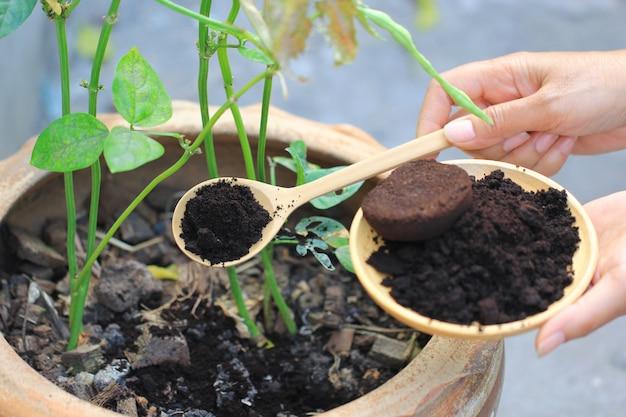 O resíduo de café é aplicado à árvore e é um fertilizante natural