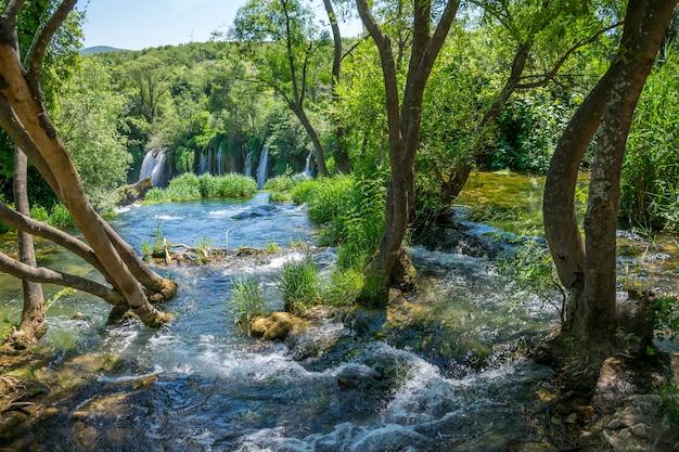 O riacho da floresta flui entre os troncos das árvores e cai da cachoeira alta.