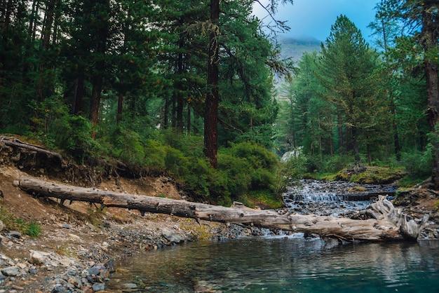 O riacho da montanha flui no lago no início da manhã na floresta.