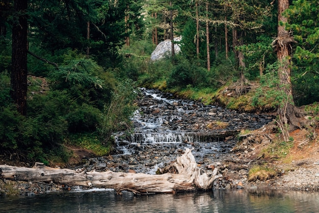 O riacho da montanha flui no lago no início da manhã. r