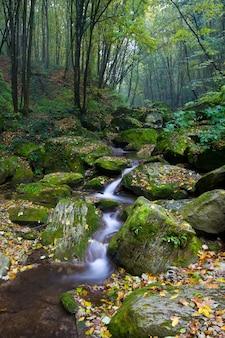 O riacho de floresta líquida flui para a madeira morta