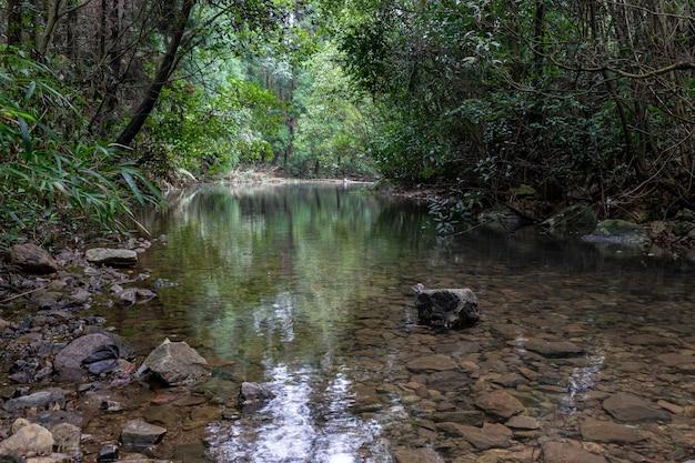 O riacho na floresta primitiva é muito plano e claro