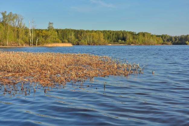 O rio está coberto de grama. floresta no fundo (2)
