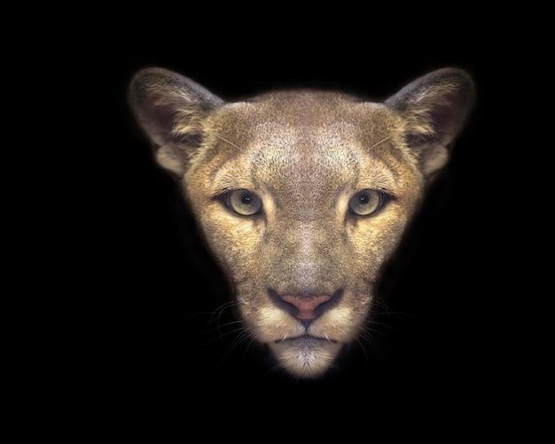 O rosto de um puma em preto.