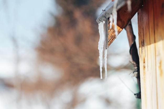 O sincelo da mola derrete na luz solar. pingentes de gelo bonitos