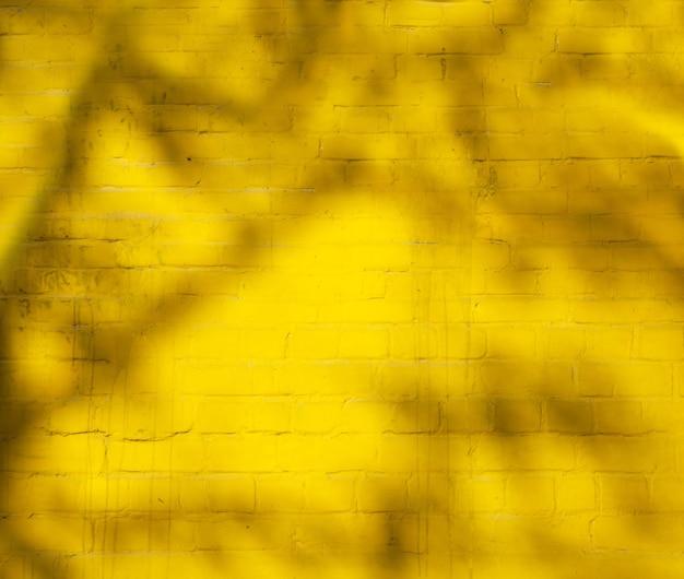 O sol brilha na sombra de uma árvore em uma parede amarela brilhante em um dia ensolarado de fundo desfocado