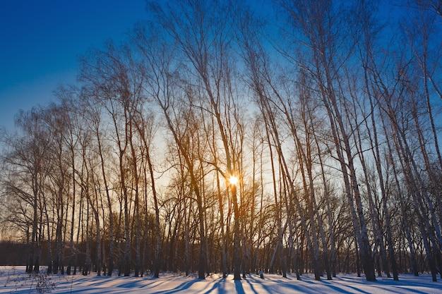 O sol da manhã brilha por entre as árvores na floresta de inverno