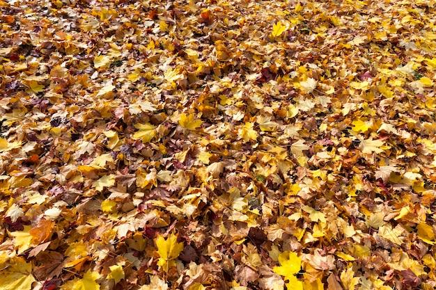 O sol do outono brilha através das folhas após a queda das folhas