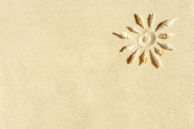 O sol formou conchas na areia limpa
