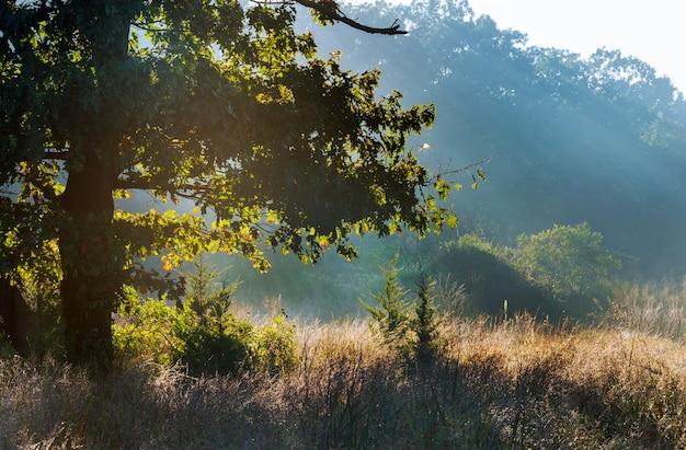 O sol nascente cai na maneira enevoada da floresta nas cores mornas do outono.