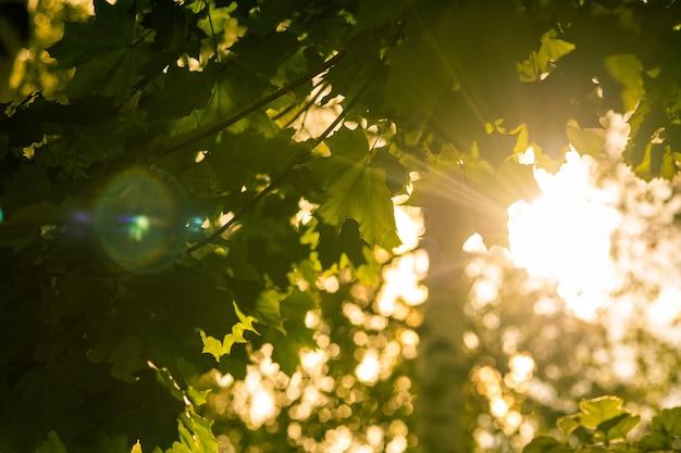 O sol veio através das folhas das árvores. luz do sol verde linda natureza.