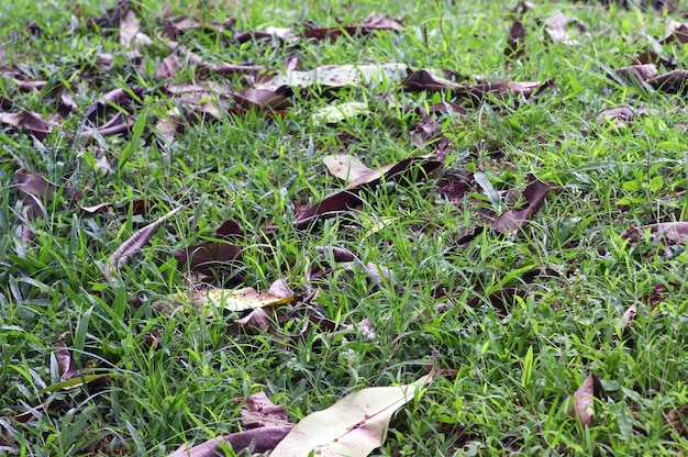 O solo da floresta, consiste em partes vegetativas de galpão, como folhas, galhos, cascas e caules, existindo em vários estágios de decomposição acima da superfície do solo.