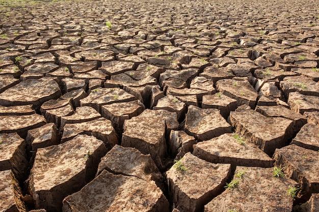 O solo seco resulta da falta de água. aquecimento global