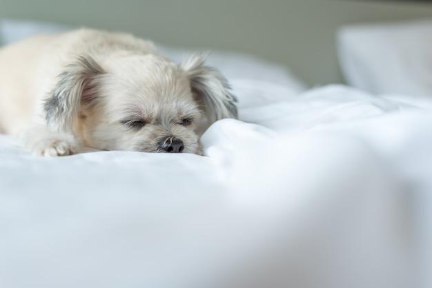 O sono do cão encontra-se na cama no quarto em casa ou no hotel