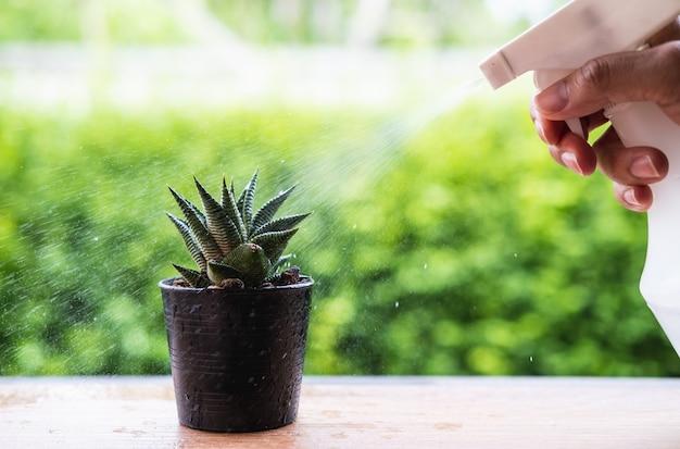 O spray de cacto seco pela água e a gota de chuva com verde natural