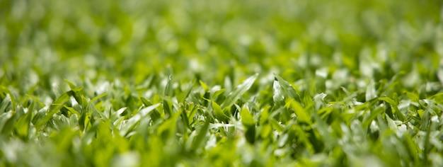 O tamanho da bandeira e fecha-se acima do fundo abstrato borrado bonito do foco seletivo de grama verde.