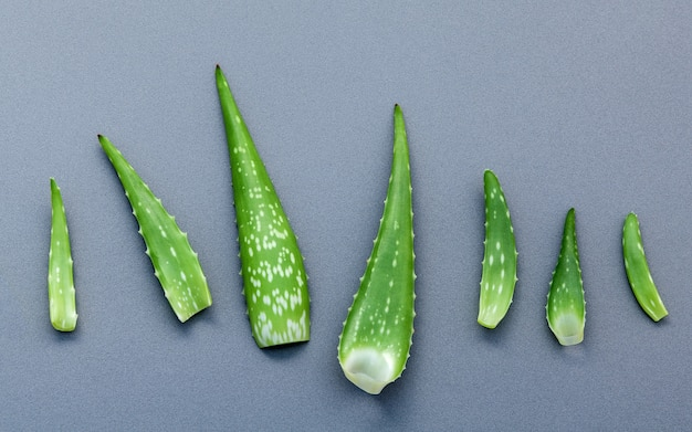 O tamanho diferente das folhas de aloés vera no fundo cinzento com plano coloca e copia o espaço.