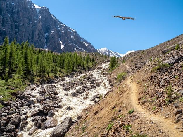 O tempestuoso rio da montanha desce da colina. bela paisagem alpina com rio rápido. poder majestoso natureza das terras altas.