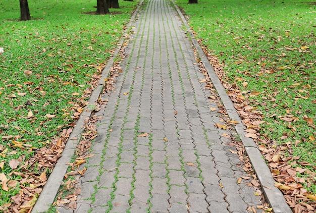 O trajeto da caminhada no parque com as folhas secadas da queda e fundo da grama verde.