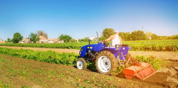 O trator cultiva o solo após a colheita. um fazendeiro ara um campo. plantações de pimenta.