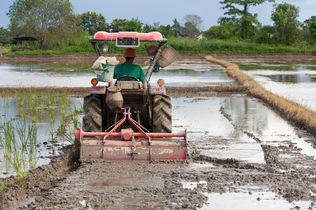 O trator está arando os campos para preparar o solo para o plantio de arroz