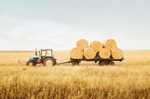 O trator remove fardos de feno do campo após a colheita. limpeza de conceitos de grãos