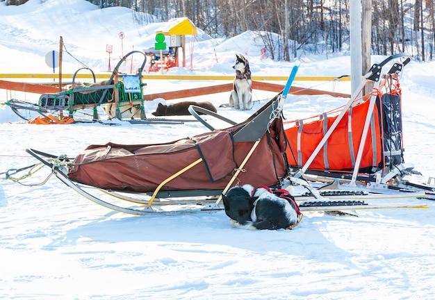 O trenó usado na geleira nothing man para trenós puxados por cães