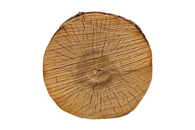 O tronco da árvore no corte é isolado em um fundo branco. madeira serrada. foto de alta qualidade