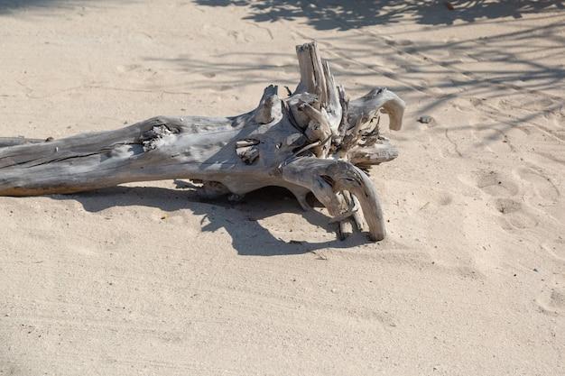 O tronco de uma grande árvore está seco e repousa na areia