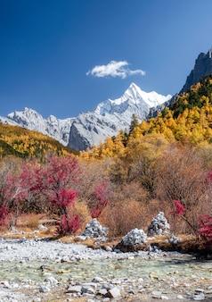 O último shangri-la com chana dorje montanha no pinhal de outono em yading
