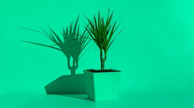 O vaso de flores abstrato contra a parede com uma sombra forte