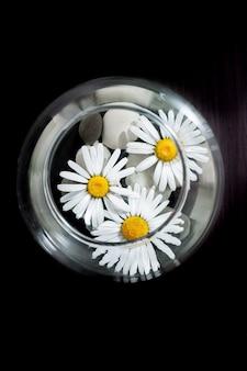 O vaso está cheio de água, pedras e botões brancos de camomila.