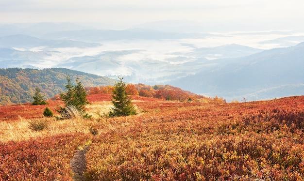 O verão modesto da vegetação das terras altas e cores invulgarmente bonitas florescem no outono, antes do tempo frio. blueberries vermelho brilhante, verde floresta de coníferas, laranja buk- montanhas sinie- charme fantástico.