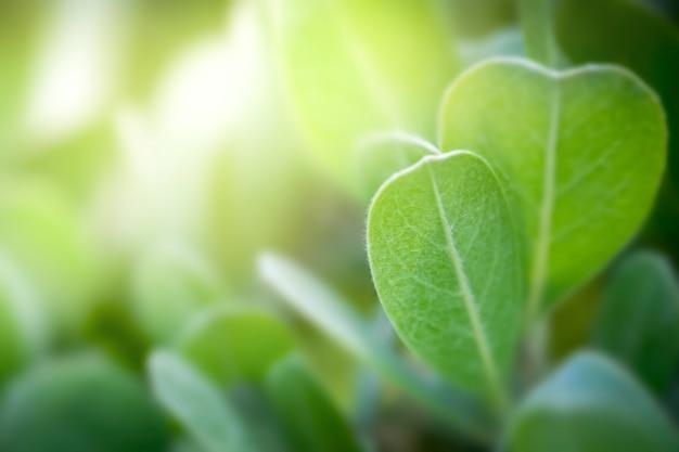 O verde fresco sae com o espaço da cópia, o bokeh borrado e o fundo da luz do sol.