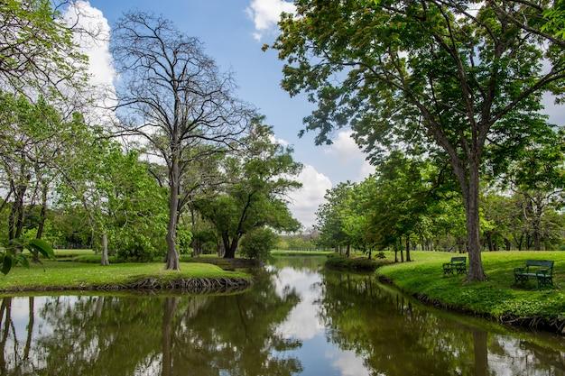 O verde jardim lindo parque com o céu azul claro