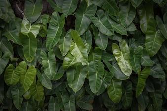 O verde tropical deixa o fundo da textura.