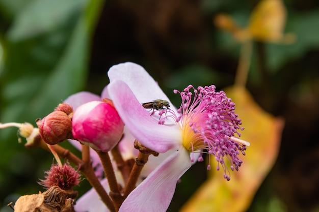 O verde voa na flor cor-de-rosa no jardim.