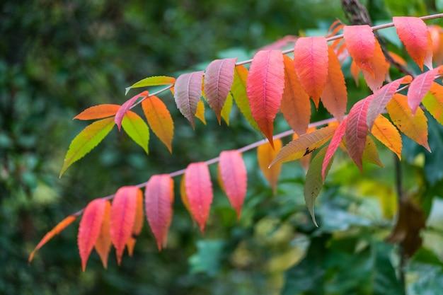 O vermelho do outono deixa o fundo.