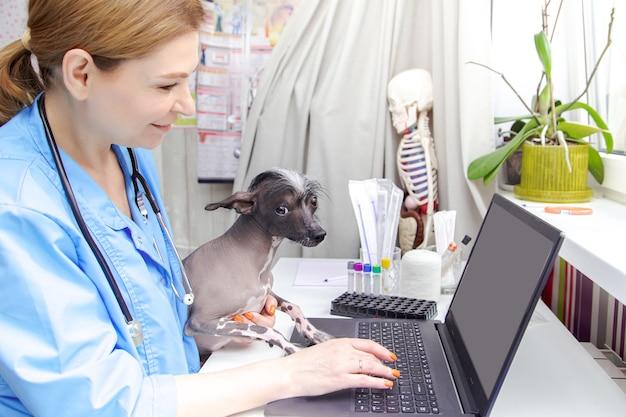 O veterinário de uma mulher de meia-idade examina o cachorro. consultório médico, laptop, equipamento médico.
