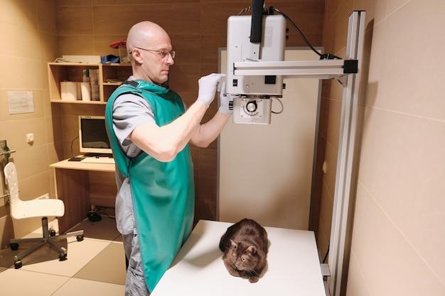 O veterinário em roupas de trabalho de proteção examinando o gato na clínica fazendo uma imagem de raio-x