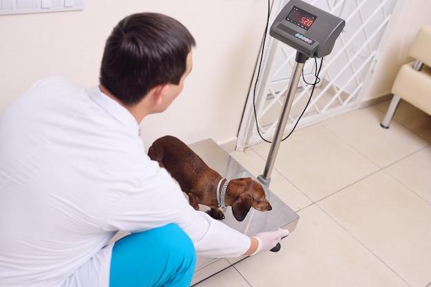 O veterinário pesa o cachorro