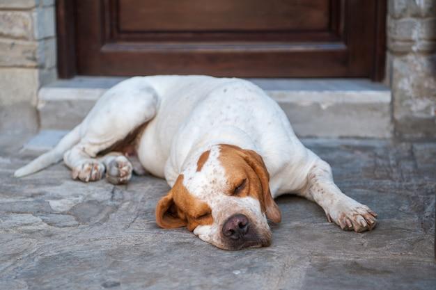 O vigia preguiçoso, o cachorro dorme perto da porta, a fadiga atingiu